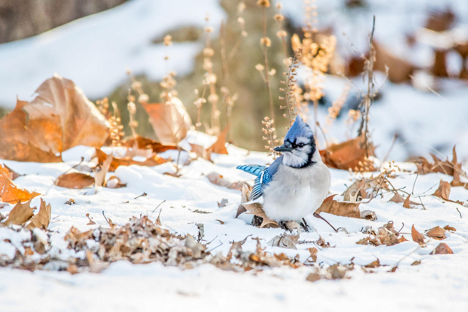 To Help Birds This Winter, Go Easy on Fall Yard Work